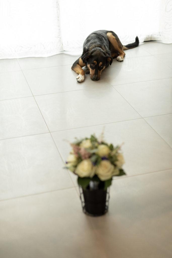 Photo chien bouquet de mariée